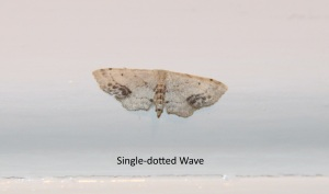 single-dottedwave